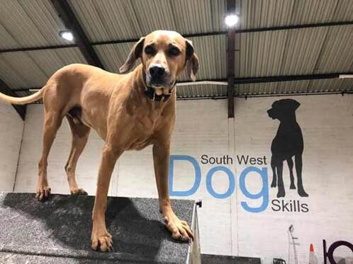 South West Dog Skills Training Activities